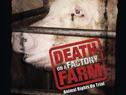 Each year, ten billion animals are raised for consumption in the U.S., mostly on sprawling, industrialized farms, where virtually no federal laws mandate how the animals are treated - though guidelines exist - and state laws are ineffective. As a result, animals are frequently subjected to what many consider cruel treatment and inhumane conditions in the interest of economic efficiency. Death on a Factory Farm chronicles an undercover investigation into alleged abuses that took place at a…