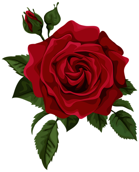 Roses Red Red Rose With Bud Transparent Png Clip Art Picture Red Rose Drawing Roses Drawing Red Rose Flower