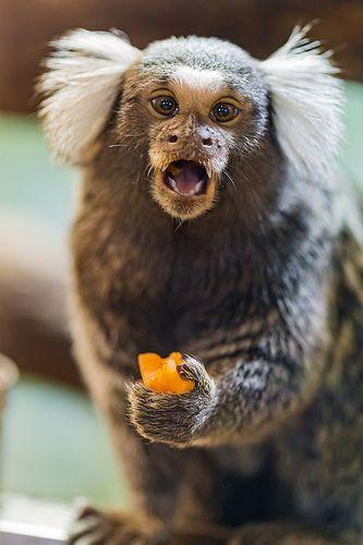 Pin On Amazing Animals