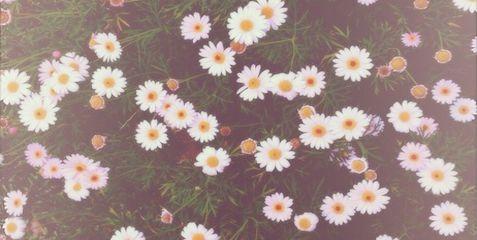Daisies Twitter Header ) x Too cool Pinterest