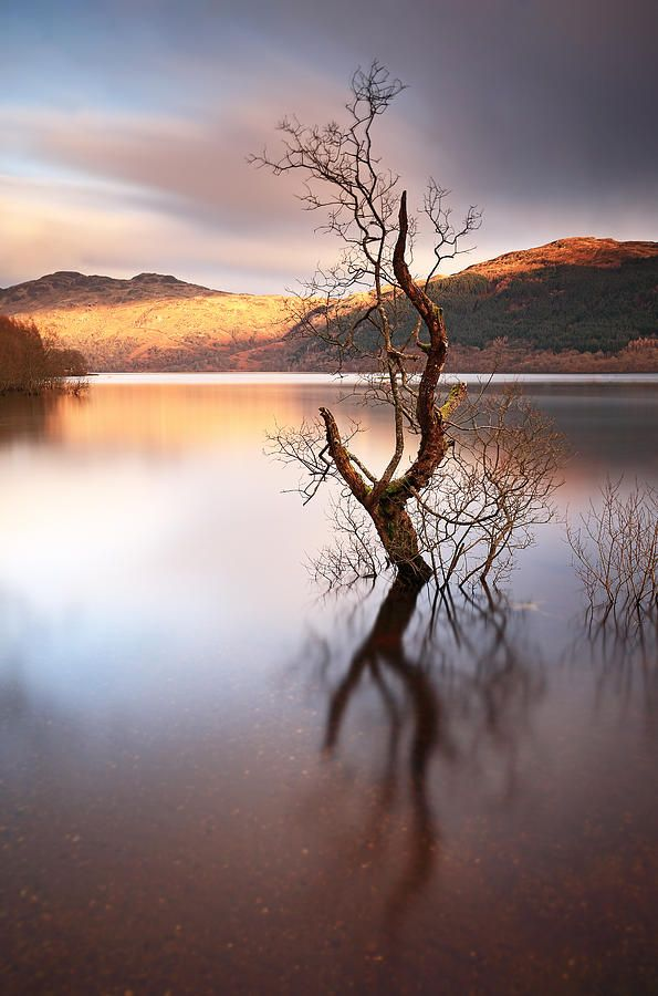 Loch Lomond Tree by Grant Glendinning