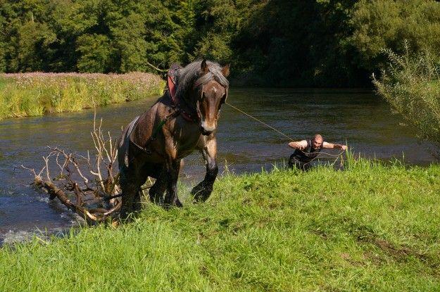 Chevaux de trait ardennais le cheval au travail horse - Dessin cheval de trait ...