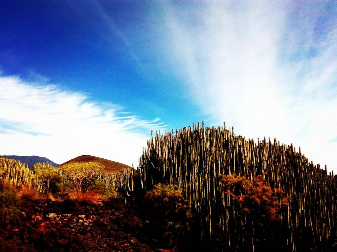 On instagram by vicalgoncal #landscape #contratahotel (o) http://ift.tt/1rRPxIX Malpais de Guimar. #sol #guimaraes #tenerifelife #blue #great_captures_sun  #teneriffa  #tenerifelicidad  #nature #sky #loves_canarias  #naturaleza  #paisajes  _lovers  s  #islascanarias  #canariasahora  #canarias  #canaryisland  #cielomania  #blueskies  #canarios5estrellas