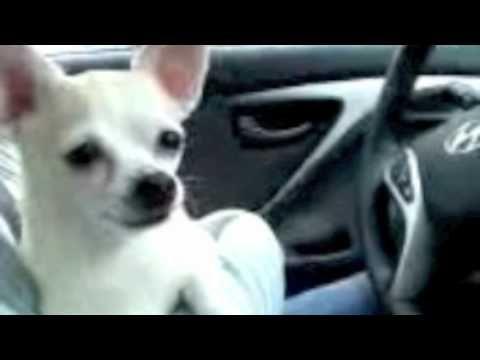 Gangnam Doggie Style Yeah Baby Dogs Youtube Dogs Doggie Style