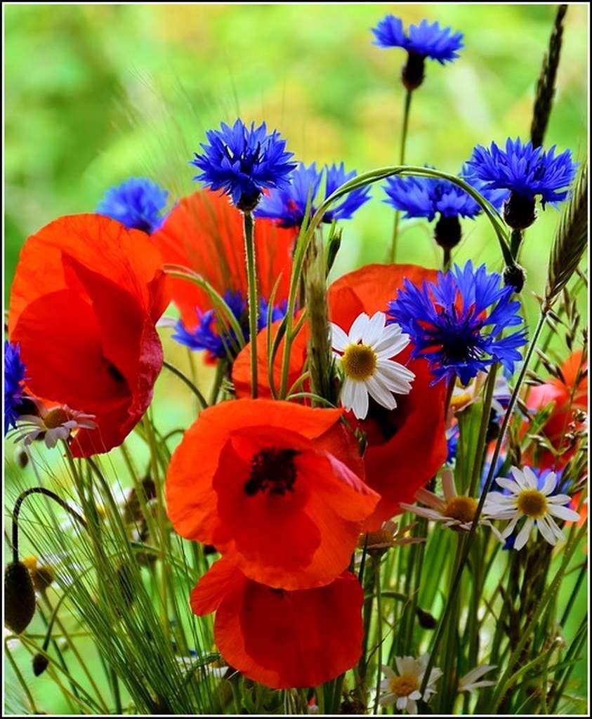 Les fleurs - fleurs des champs | Fleurs sauvages, Fleurs ...
