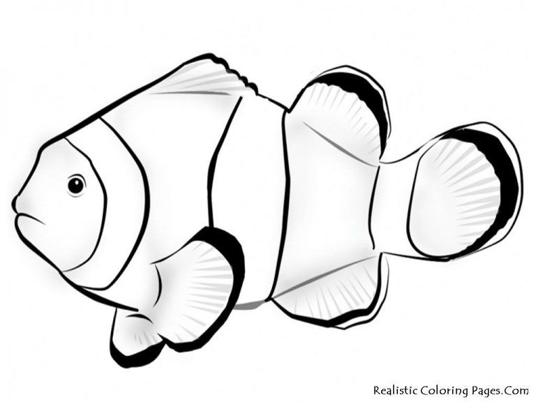 Sea Anemone Coloring Pages Fish Coloring Page Animal Coloring