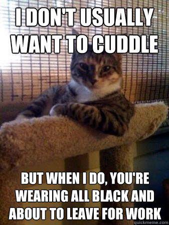 hahaha cat humor is the best