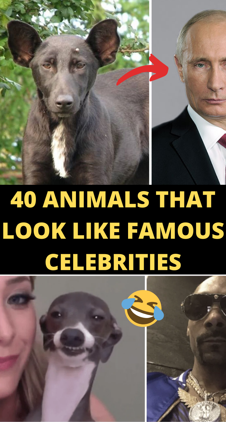 40 Animals That Look Like Famous Celebrities Haha Funny Funny Laugh Animal Jokes