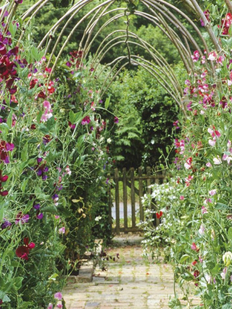 Nice bows of willow and wonderful smelling sweet peas - mooie, geurende bogen van wilgentenen en Lathyrus