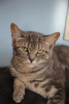 Adopt Gerda On Animal Shelter Pet Adoption Cute Cats