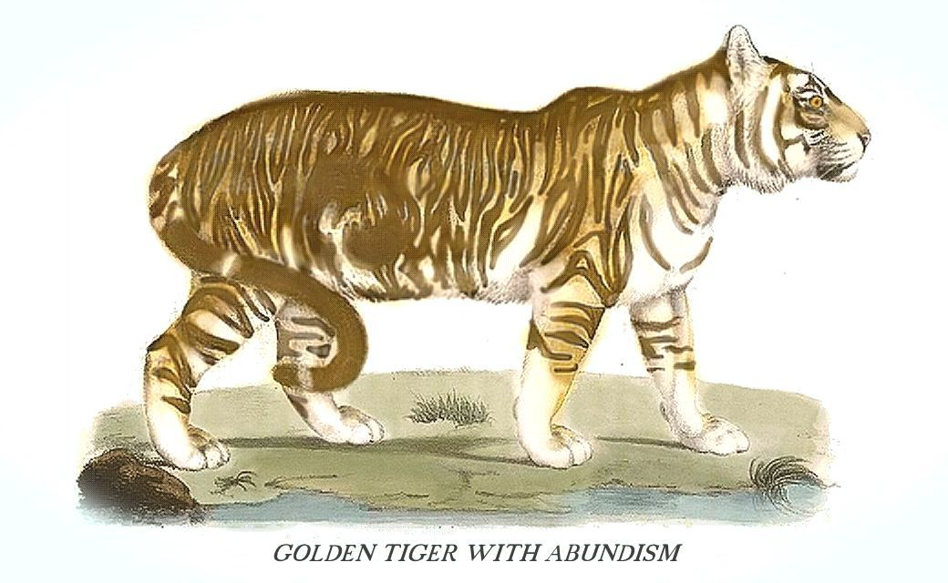 Golden Tiger Exhibiting Pseudo Melanism Abundism Where The Black Striping Is Denser Than Normal Pseudo Melanism Is A Rece Cat Colors Tabby Cat Golden Tiger