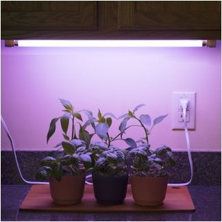 Set Of 2 14w Linkable T5 Grow Light Fixtures With Lamps Fixture With Fluorescent Tube Grow Lights Grow Light Fixture Grow Light Fixtures