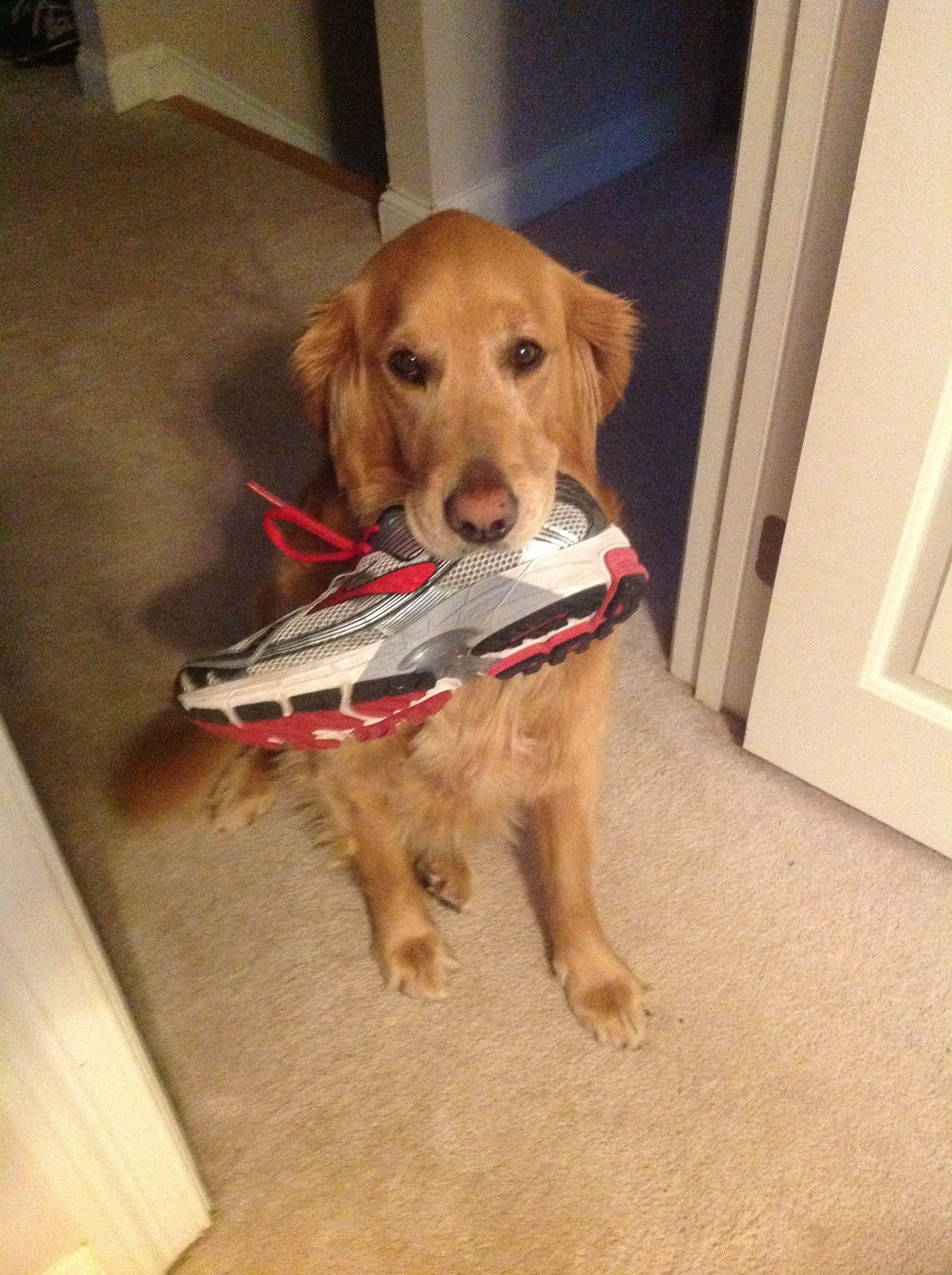 Tika Found Dada S Shoe Dog Love Dada Shoes Dogs