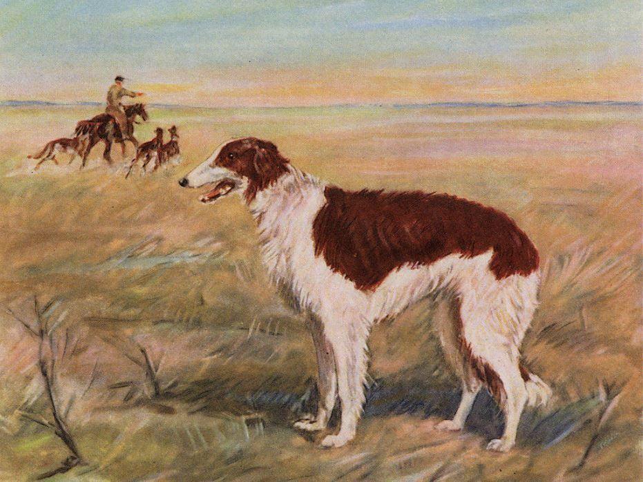 z- Borzois Hunting w Horseman (2b)