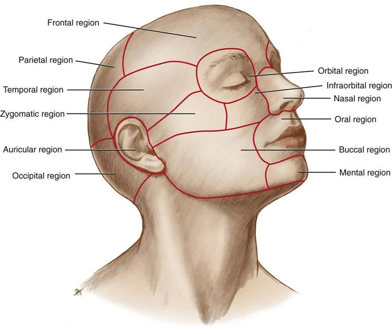 Image result for parietal region of head | Acupuncture | Pinterest