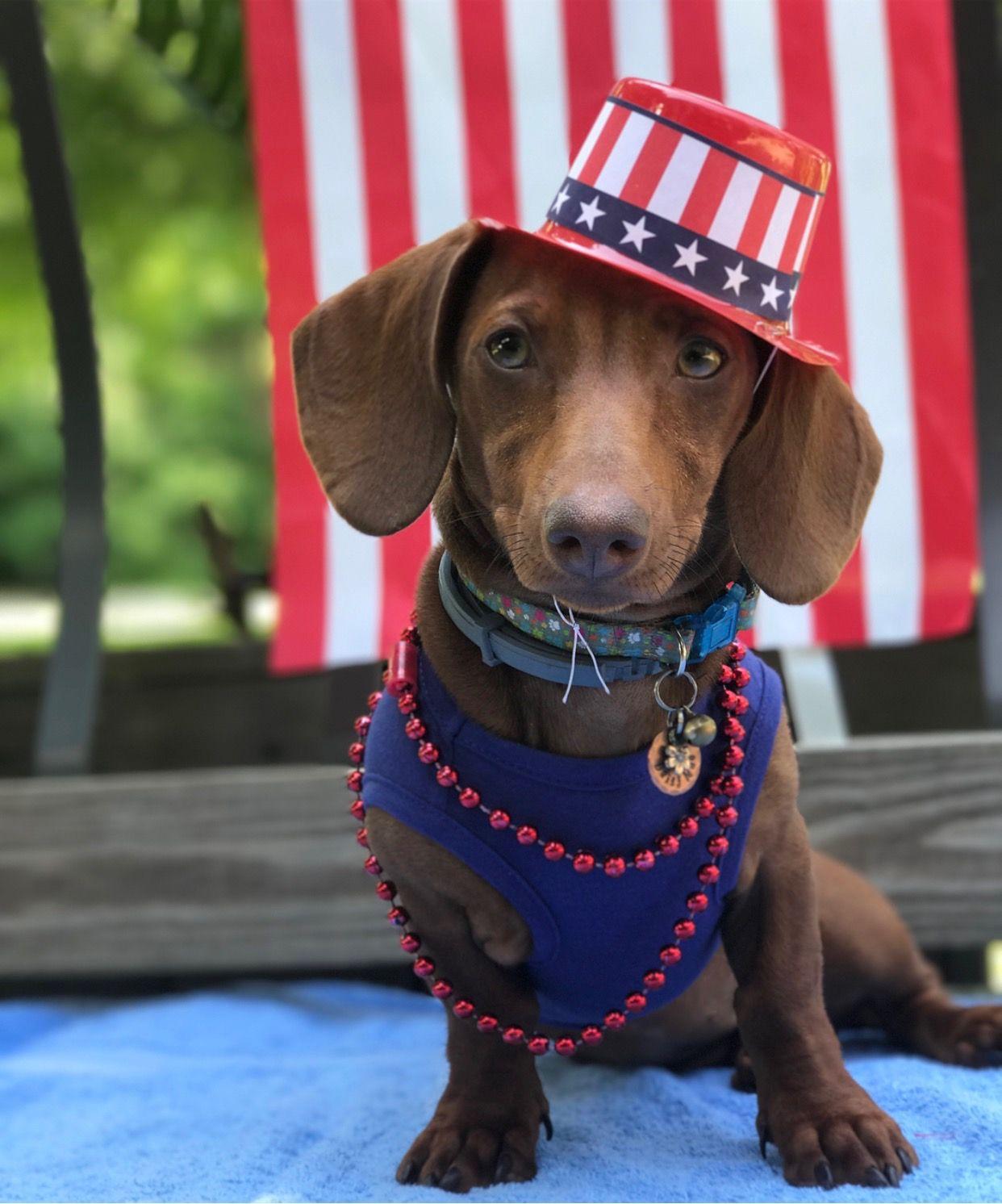 Pin by Nancy S on Dachshund Holidays! Dog daycare