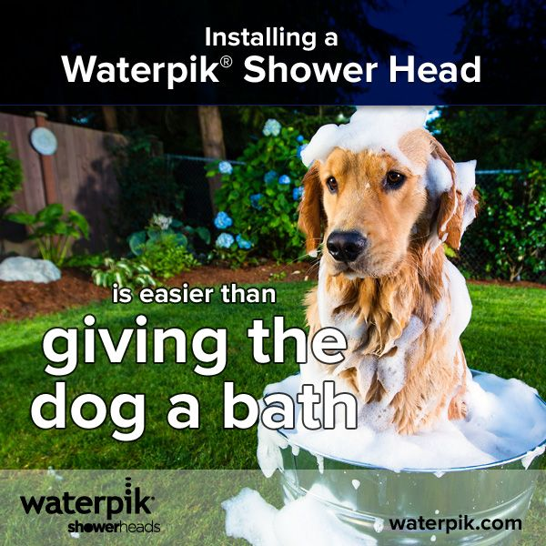 Installing A Waterpik Shower Head Is Easier Than Giving The Dog A