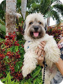 Pin by Lisa A on PUPPY ALERT!!!!!! Tibetan terrier