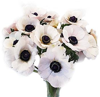 Buy White Anemone Flower Online White Anemone Flower Anemone Flower Flowers For Sale