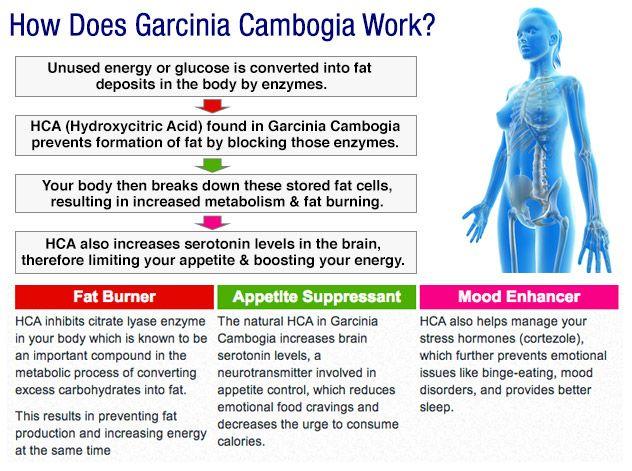Using Cla With Garcinia Cambogia