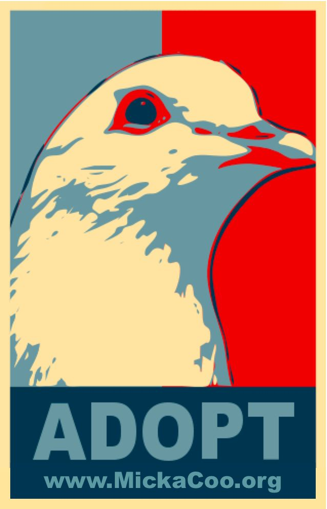 Don T Buy Don T Breed Adopt Pet Pigeon Birds In The Sky Dove Pigeon