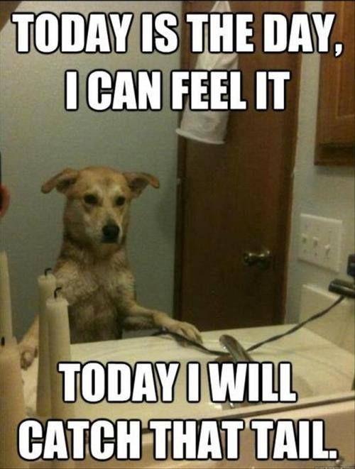 meme dog motivation affirmation animals pinterest funny