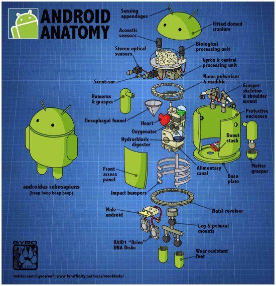 Anatomy Of Android Robot Interesting Stuff Pinterest Anatomy