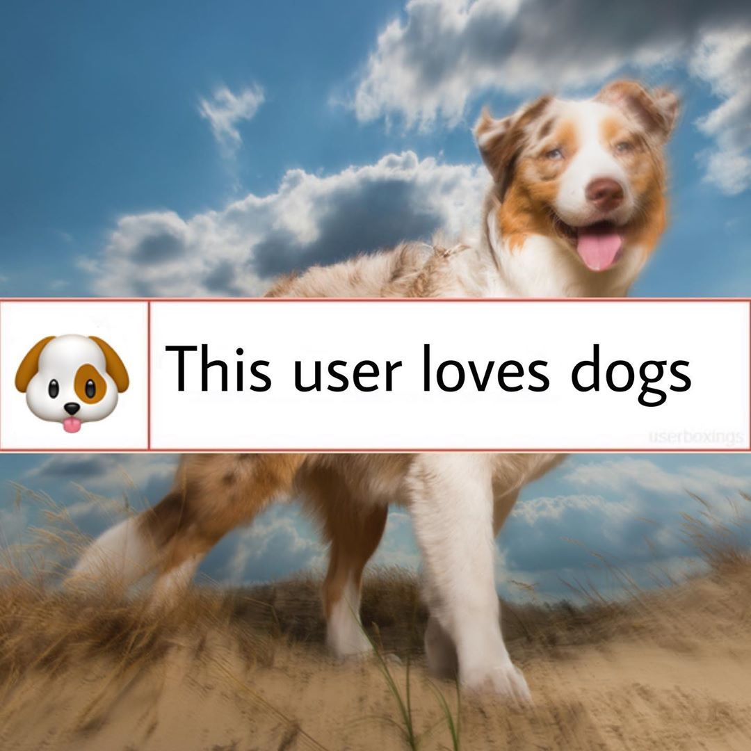 This User Loves Pets Do You Have Any Pets User Box Userbox Userboxes Animals Pets Dog Cat Fish Hamster In 2020 Pets Animals Dogs