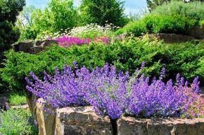 Kocimietka I Inne Kwiaty Kwitnace Cale Lato Plants Garden Topiary
