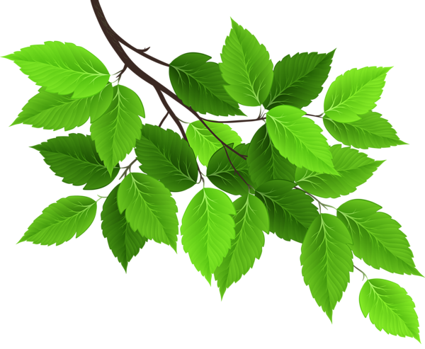 Branch With Green Leaves Png Clip Art Image Flower Png Images Flower Images Digital Flowers