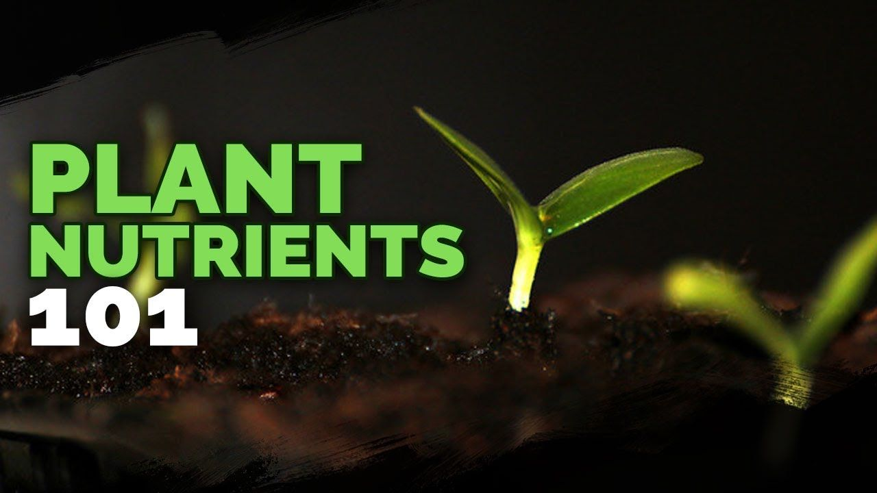Plant Nutrition 101 All Plant Nutrients And Deficiencies Explained Youtube In 2020 Plant Nutrients All Plants Plants