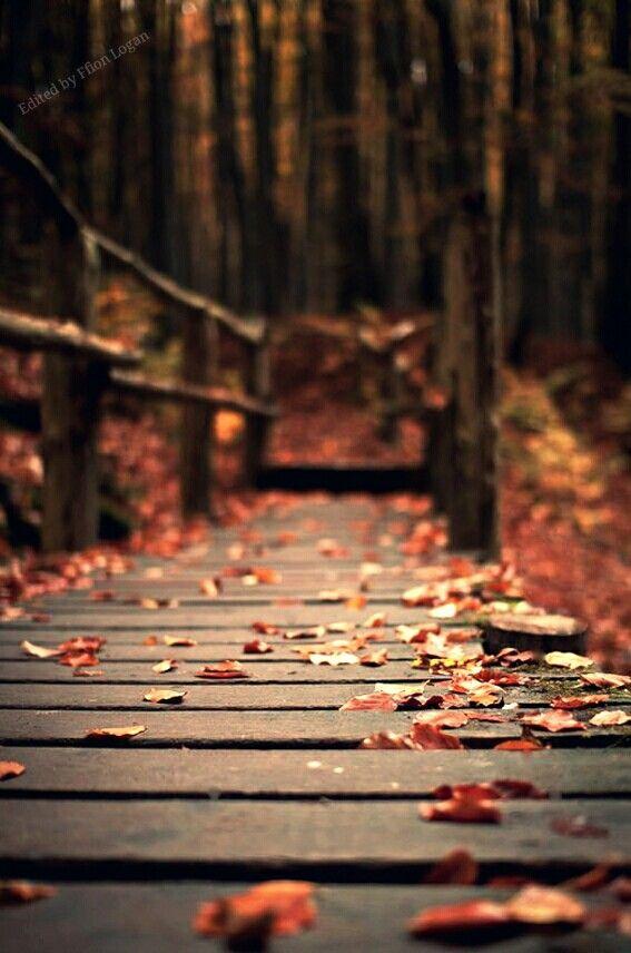 Autumn 1 #autumnfoliage