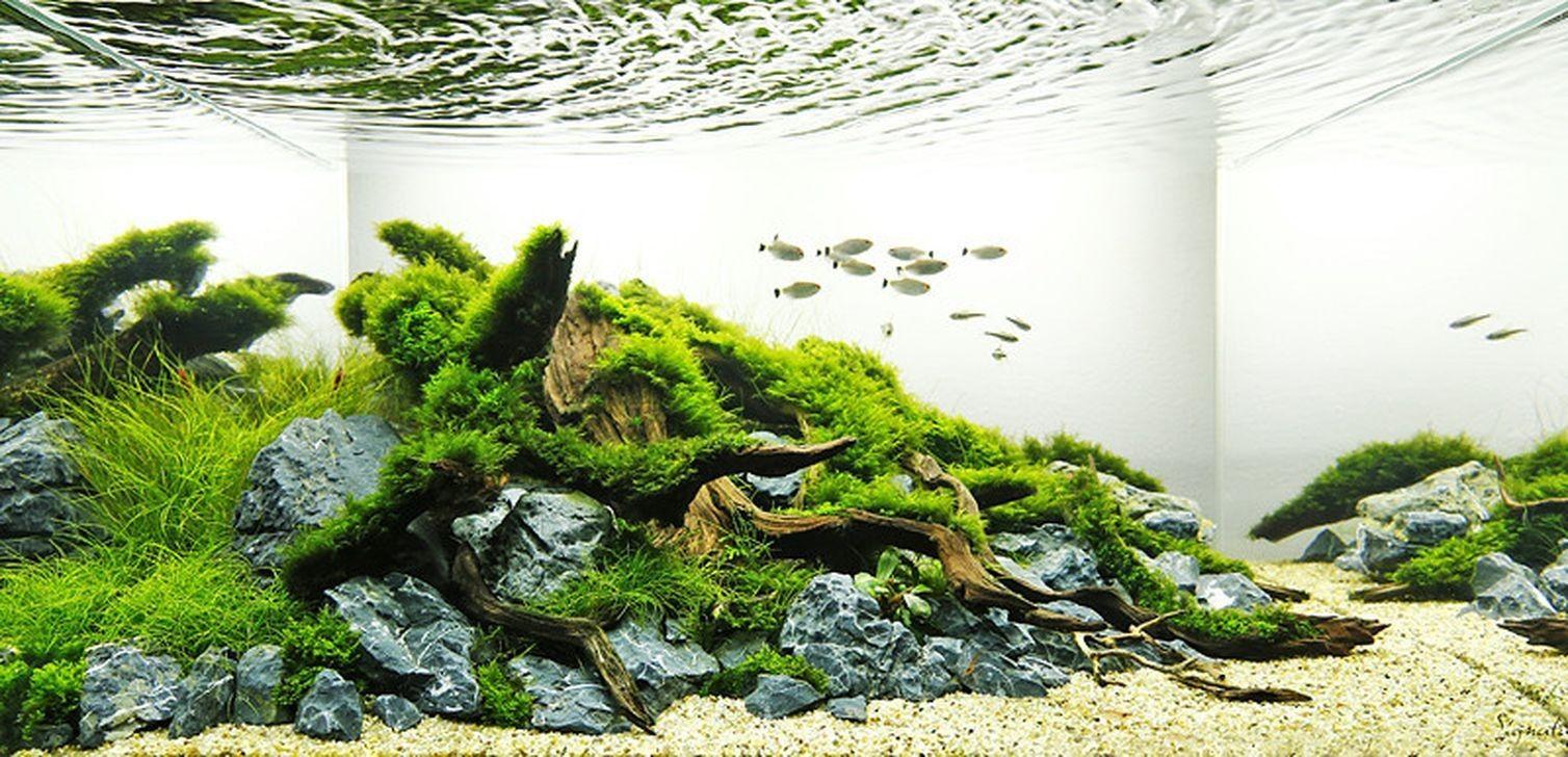 27 Awesome Aquascaping Ideas You Will Totally Love Page 12 Of 30 Nature Aquarium Aquascape Design Aquascape