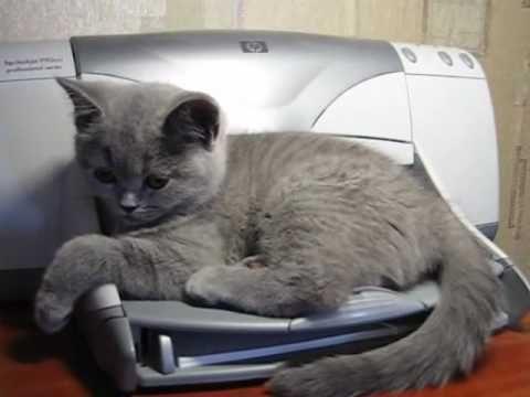 Cat & Printer-Very short, cute/funny video.
