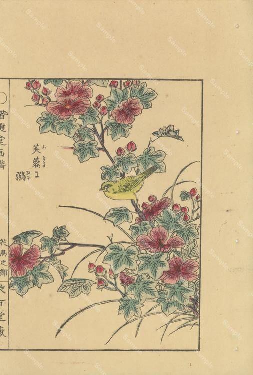 Authentic Japanese woodblock print, Decorative art, wall art, home ...