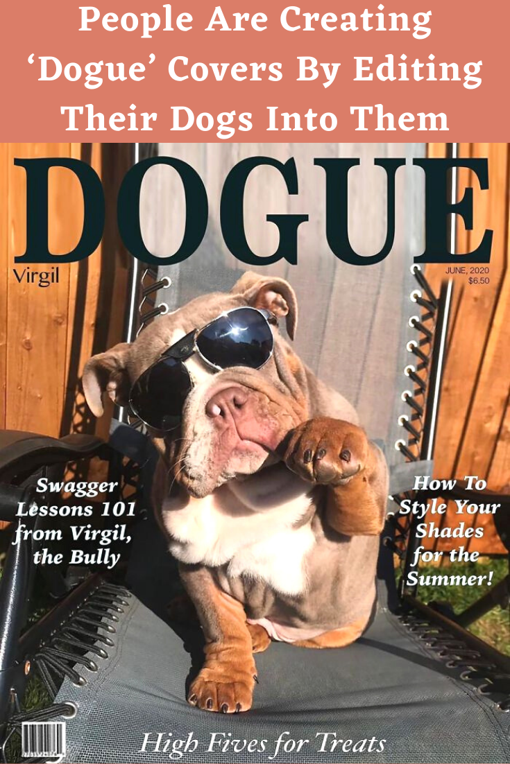 While 2020 has been a pretty horrible year so far, you can't deny that it has lead to some great online trends. One of the newest trends, the #VogueChallenge, had people editing pictures of themselves on the cover of the fashion magazine. But that wasn't enough for some: pet owners started putting their dogs (and a few cats) on the cover of Vogue.