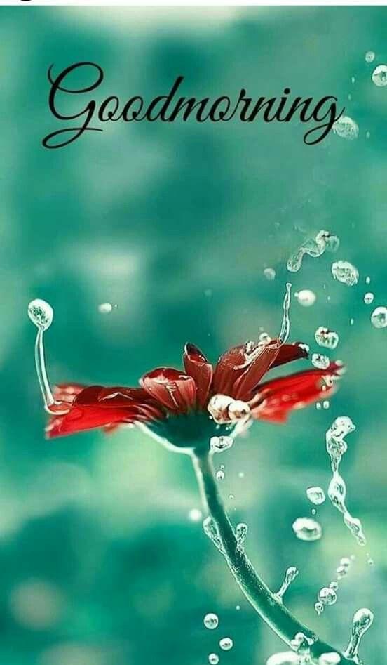 Pin By Susan Matthews On Good Morning Rise Shine Frases De
