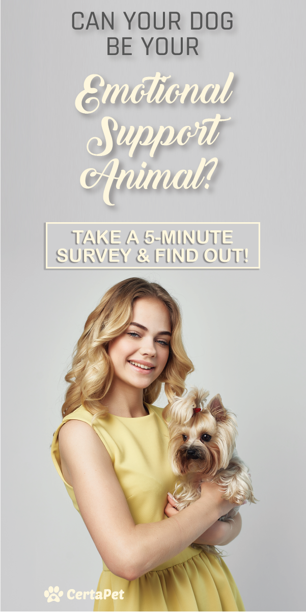 Get An Emotional Support Animal Letter Consultationyou Can Trust Emotional Support Animal Emotional Support Dog Support Animal