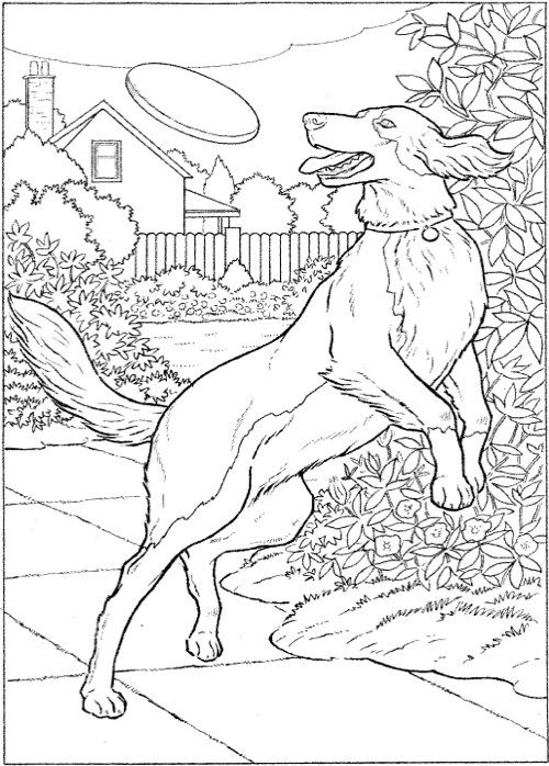 dogs to paint or color dover art coloring book - Dover Coloring Books For Adults