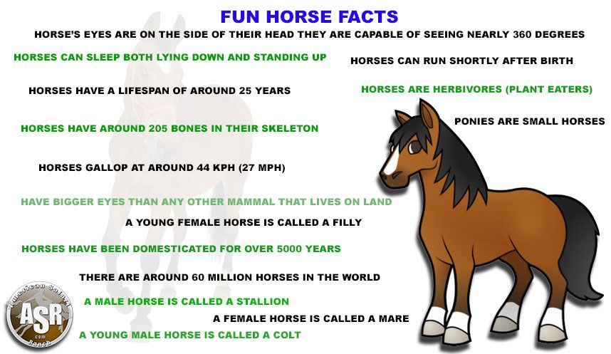 american_safari_ranch_fun_horse_facts.jpg (858×497) | Horse Facts ...