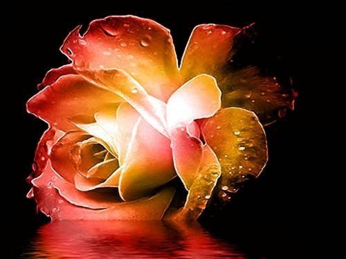 Фантастичні квіти - Шпалери для телефона, №10553