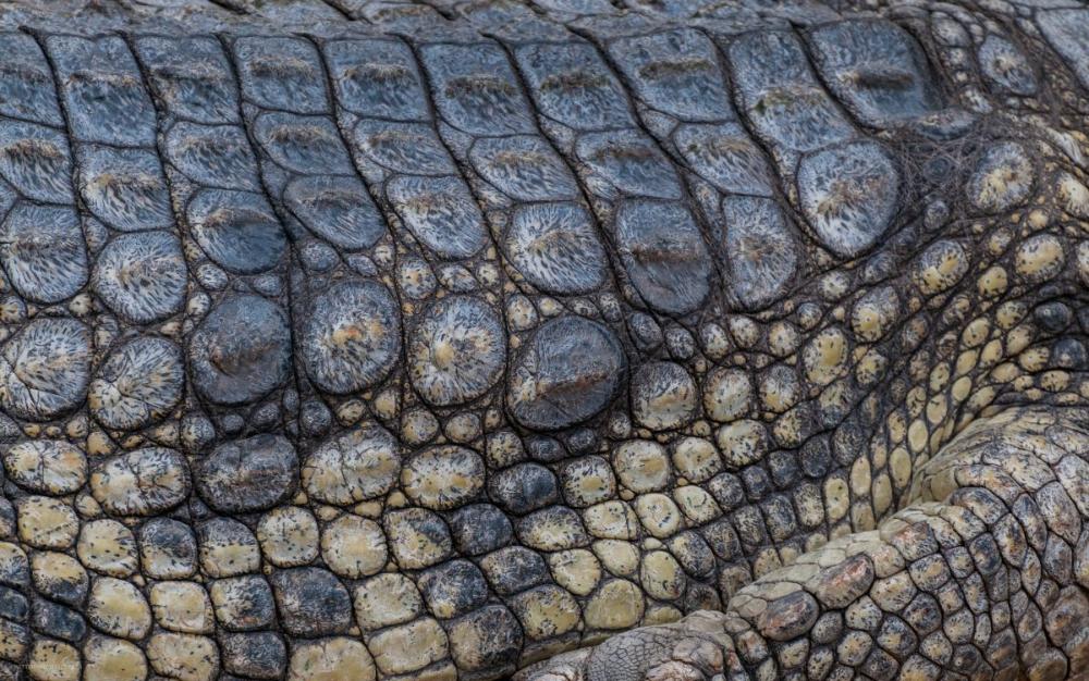 Crocodile Skin Texture Reptile Background Pattern Pictures In 2020 Skin Textures Crocodile Skin Photo Texture
