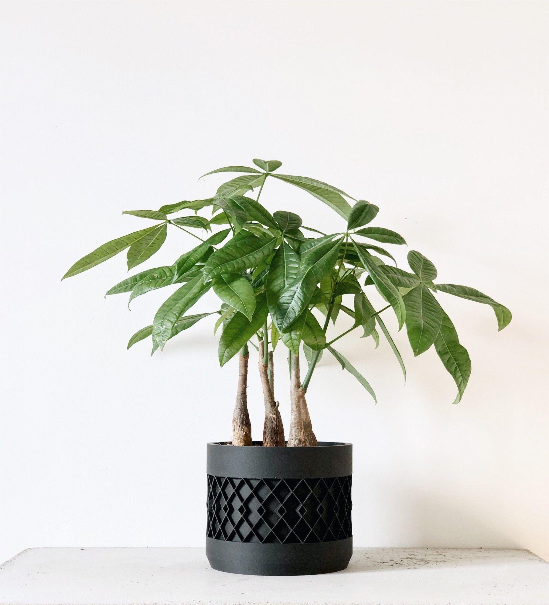 Large AZTEK planter Black en 2020 (avec images) Fleurs