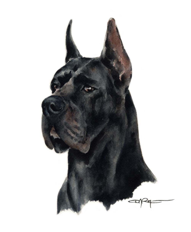 Black great dane art print by watercolor artist dj rogers