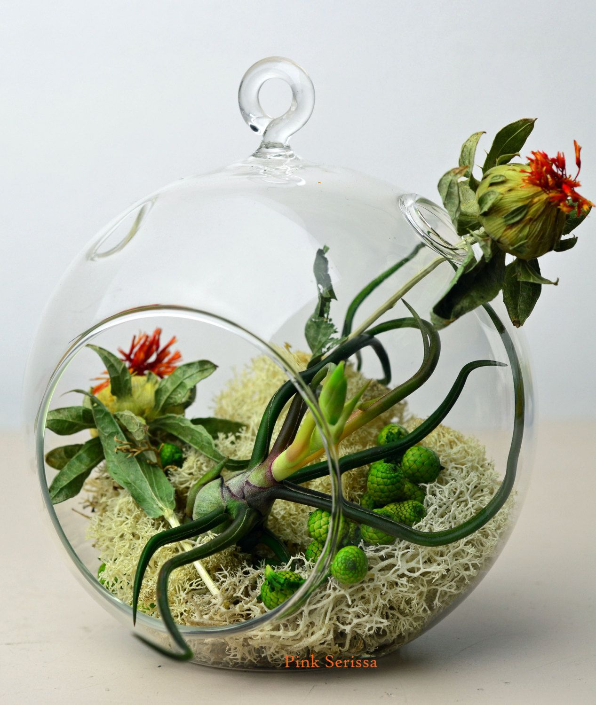 Hanging glass orb terrarium with air plant Tillandsia