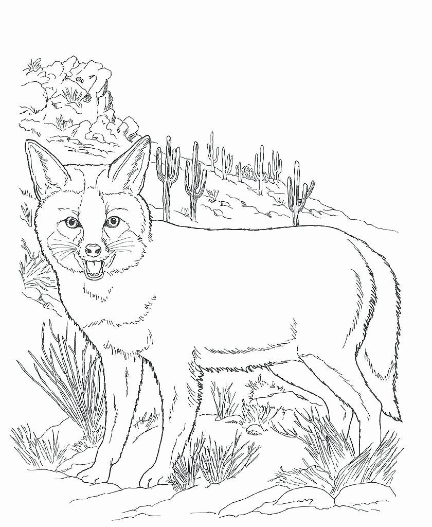 Animal Coloring Pages For 1st Grade New Desert Animals Coloring Pages Kit Fox Cellarpaper Zorro Del Desierto Dibujos Zorro