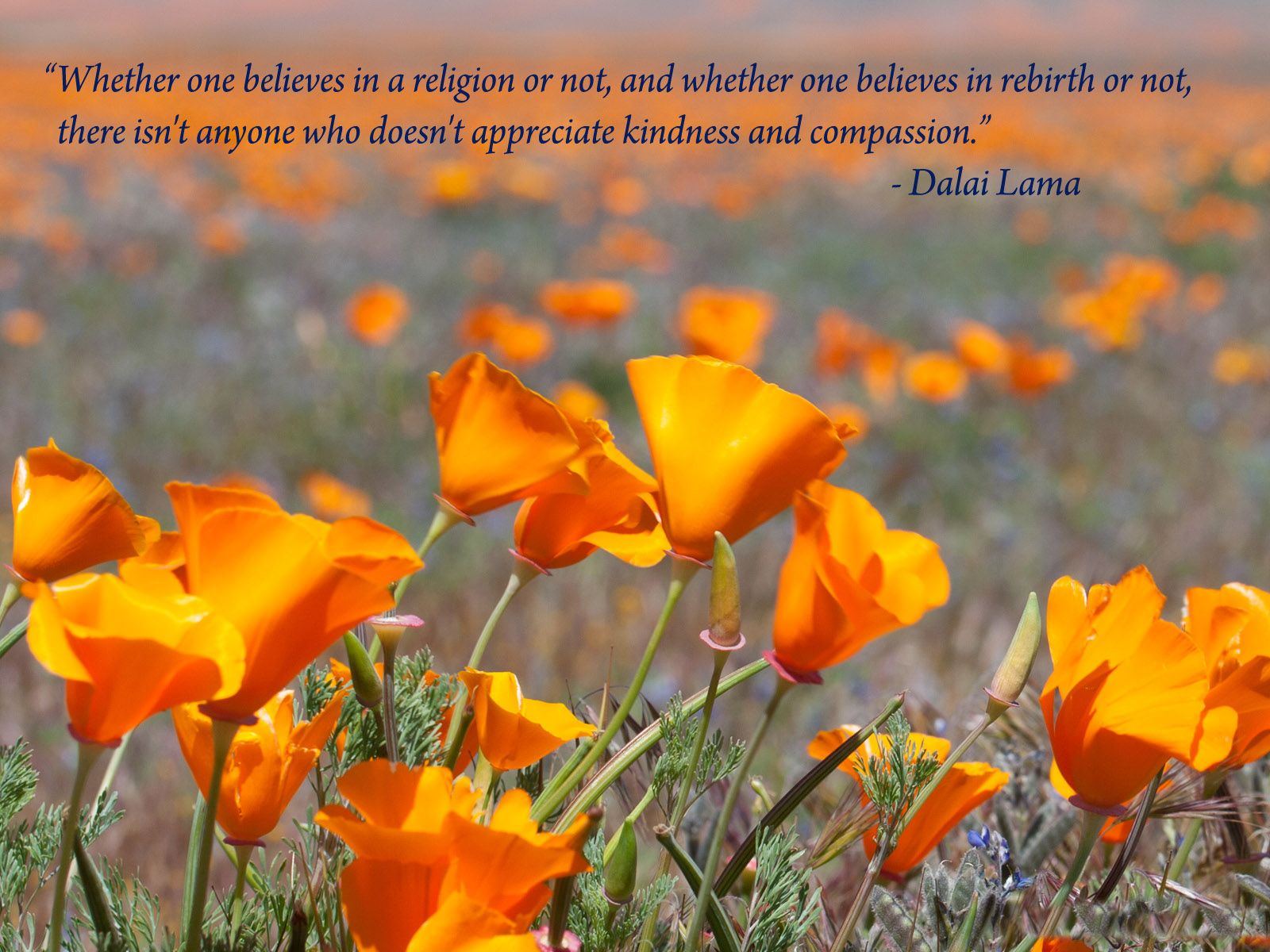 Whether One Believes In A Religion... #Quotes #Daily #Famous #