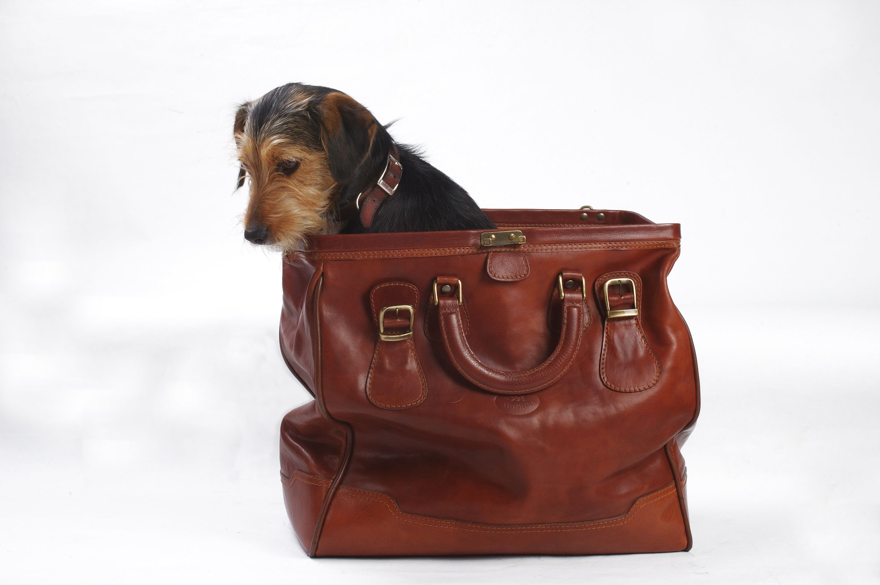 What Dog Carrier Is Right for You? poshpup dogs