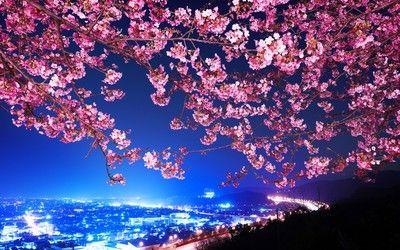 Cityscape Under The Cherry Tree Hd Wallpaper Cherry Blossom Wallpaper Blossom Trees Tree Hd Wallpaper