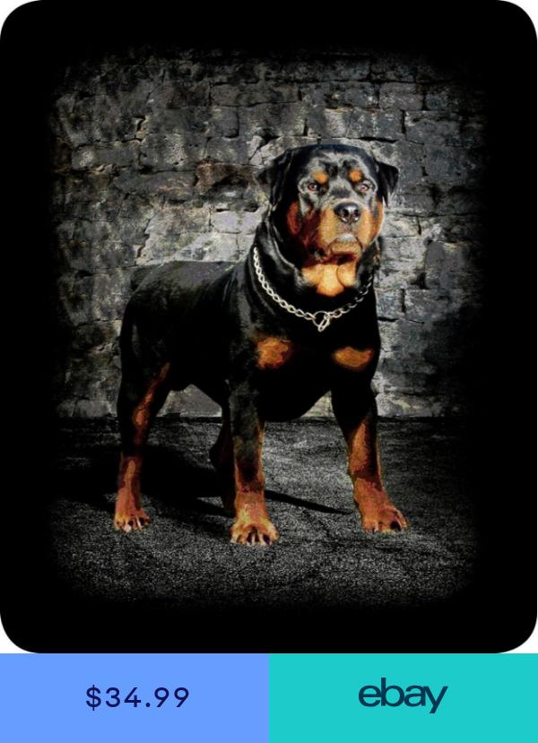 Queen Rottweiler J Charron Guard Dog Mink Faux Fur Blanket Warm Super Soft Full Rottweiler Dog Rottweiler Rottweiler Puppies